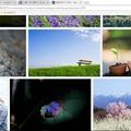 写真: iStock自然カテゴリー