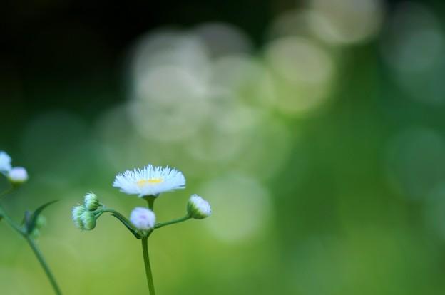 写真: 緑の背景