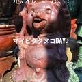 Photos: 4/1マイピクタヌコday♪