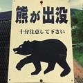 写真: 猿は出没