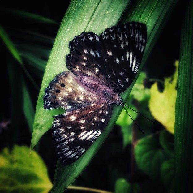 Photos: IMG_9621