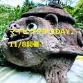 Photos: 11/8マイピクタヌコDAY♪開催