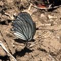 蝶好きの務め