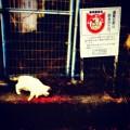 Photos: しっぽの声 動物愛護