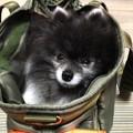 Photos: 鞄犬