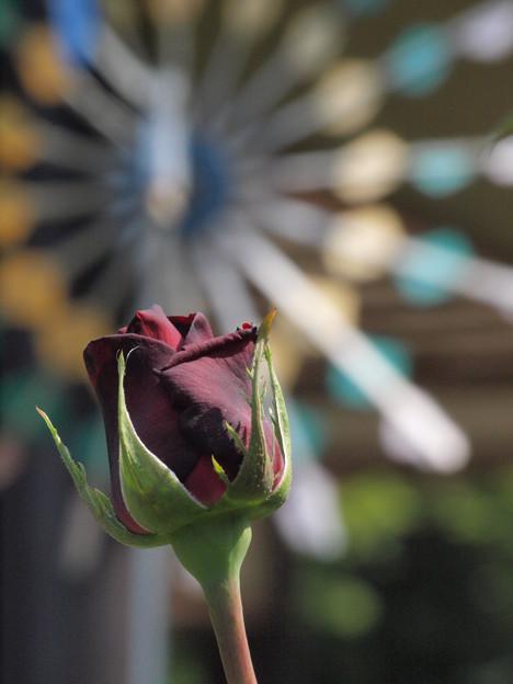開花前のとき