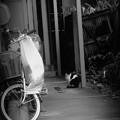 写真: 川越猫