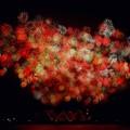 Photos: 夜空に花束を