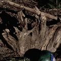 まりと流木