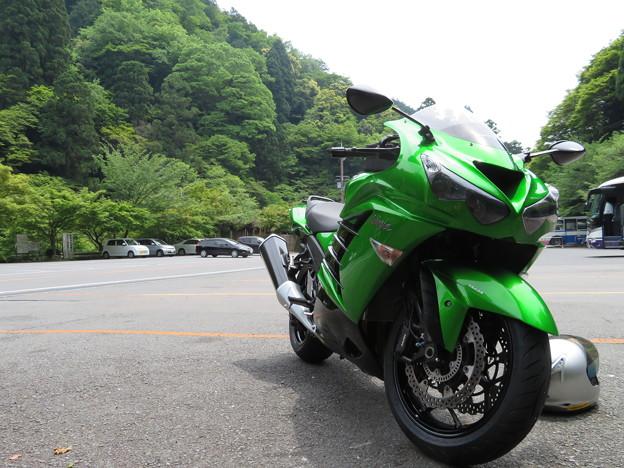 グリーン 緑 Green