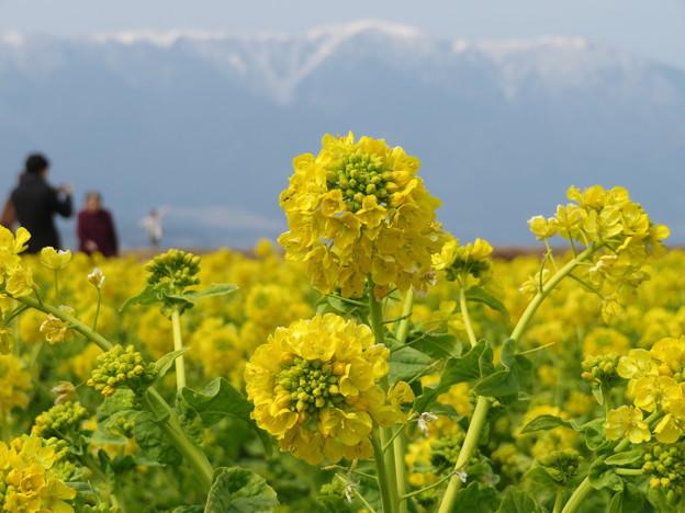 写真: 冬の黄色
