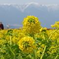 Photos: 冬の黄色