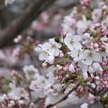 Photos: 咲きました!