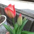 次の花が咲きました!