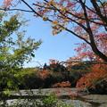 写真: 秋の予感