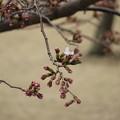 春、到来!