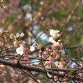 Photos: 今年は、ゆっくり咲いてます