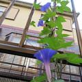 Photos: まだ、咲くよ。