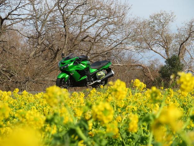 Photos: 黄色と緑