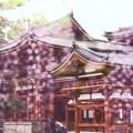 Photos: 藤色の平等院♪