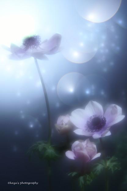 (夢見るアネモネ♪改め) 海底の花