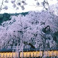 Photos: 大石桜 ♪
