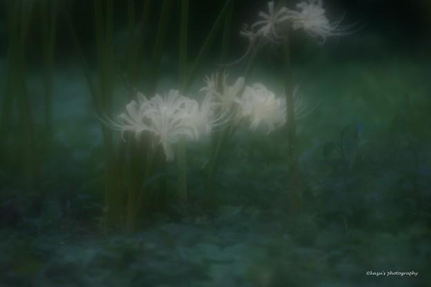 写真: ひっそりと咲く♪