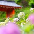 Photos: 三室戸寺にて♪