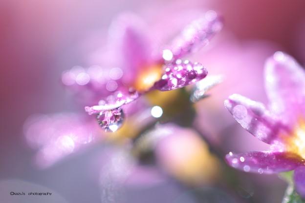 宝石の輝き♪