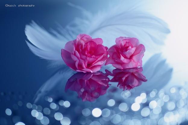 君は薔薇のように美しい♪
