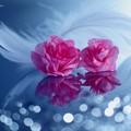 Photos: 君は薔薇のように美しい♪