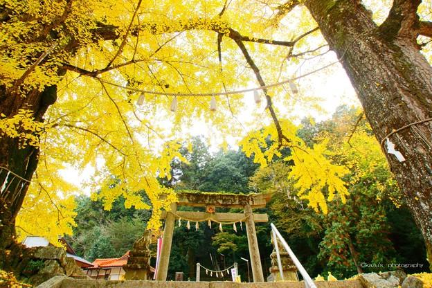 讃岐路の黄葉~岩部八幡神社♪