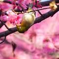 Photos: 桜の園♪