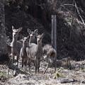 写真: すぐ近くに鹿の集団!