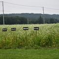 写真: 市民農園?