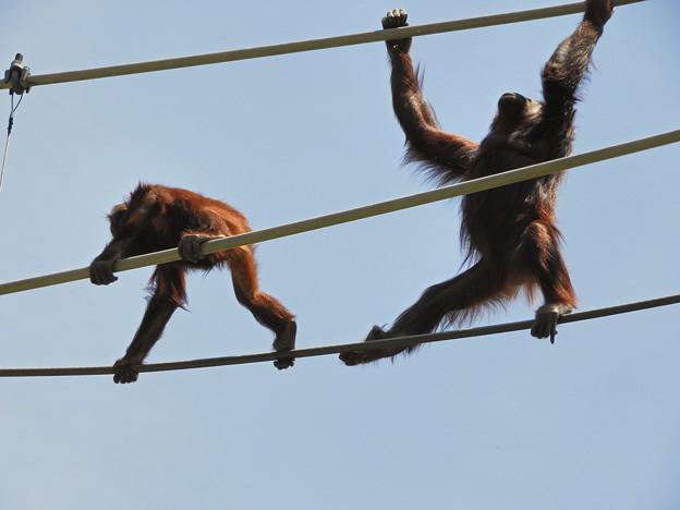 DSCN0523_1 オット!猿が落ちたら洒落にならないぜ~
