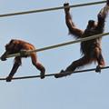 Photos: DSCN0523_1 オット!猿が落ちたら洒落にならないぜ~