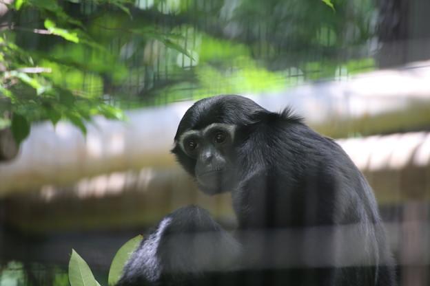 IMG_7737         賢猿