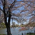 Photos: IMG_3870      不忍池の桜風景
