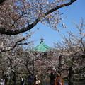Photos: IMG_3882       弁天堂を望む