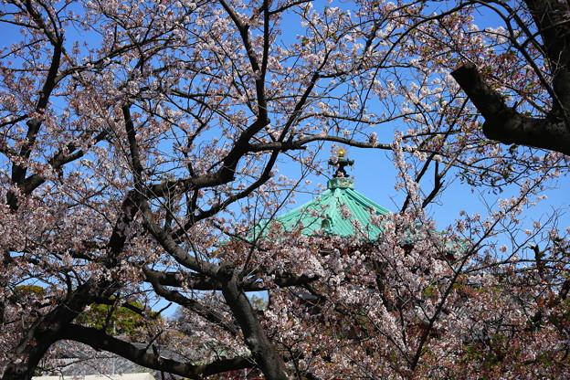 IMG_3887   桜のかいまに弁天堂の屋根を望む