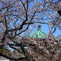 Photos: IMG_3887   桜のかいまに弁天堂の屋根を望む