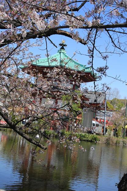 IMG_3889   ポストカード風不忍池の桜