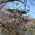 Photos: IMG_3889   ポストカード風不忍池の桜