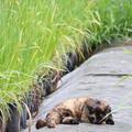 Photos: IMG_0013   野良猫様休憩所