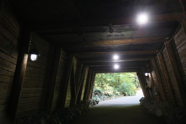 Photos: IMG_3109 ズーラシア何コレ?(トンネル?)