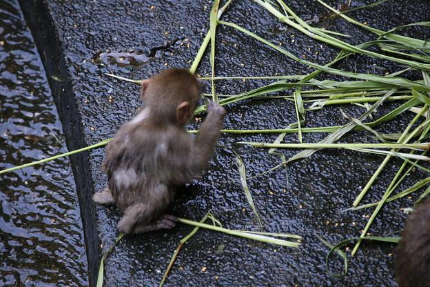 Photos: IMG_6003 サル社会に見るある縮図-3