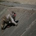 Photos: IMG_5998 サル社会に見るある縮図-4
