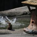 Photos: IMG6038 サル社会に見るある縮図-5