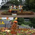 Photos: IMG_8531 動物園だってハロウィン